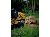 Tree Stump Removal and Grinding Service