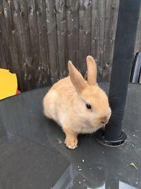 Baby sandy rabbit