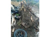 Free tree stumps / wood