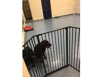 WANTED dog trainer for hall hire