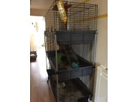2 guinea pigs and 3 tier cage