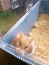 Hamster 😔