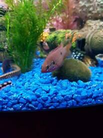 Fish For Sale (OFFERS)