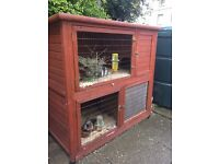 Teddy guinea pigs x 3 plus 2 tier hutch plus run inc any food and hay everything you need