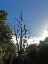 Arborist Tree Surgeon Job