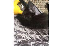 Sweet Kitten named Bea