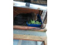 Wanted outdoor rabbit hutch