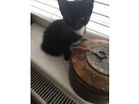 Cutest kittens for forever homes