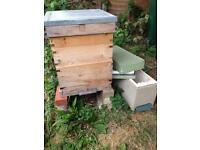 Hive plus lots of beekeeping extras