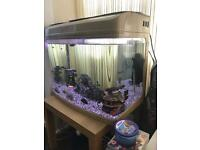 Fish Tank 95L with full set up and tropical fishes