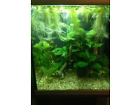 Fish tank/the whole set