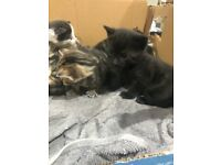 Beautiful friendly kittens ready for there new homes