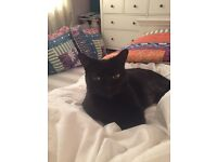 Missing small female black cat from Blackheath area
