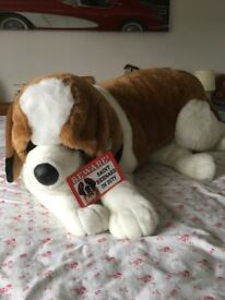 New St. Bernard dog , cost £90 4 weeks ago unwanted present ideal Christmas present