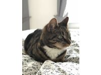 Cat needs re homing