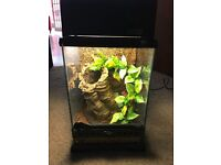 Reptile tank / Exo Terra Nano Terrarium / Gecko tank