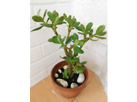 2 x House Plants included Pots