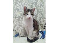 missing cat Morley