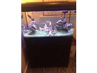 2 n a half fish tank