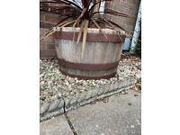 Wooden barrel plant pot