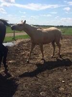 3 year old mares for sale