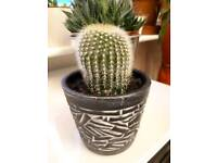small cactus plant (3)