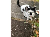 FOUND KITTEN IN E7 UPTON PARK/FOREST GATE