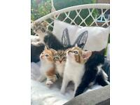 5 beautiful kittens looking for a sweet home