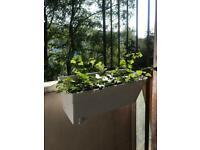 Ivy plants + pot + rail brackets