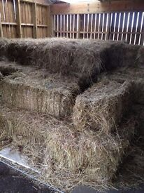Hay for sale. Square bales.