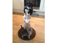 **KITTENS FOR SALE £35 EACH - 11 weeks old on 19th August 2016 1 x Female & 1 x Male**
