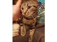 Female 5 month old kitten
