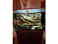 selling my fish tank 3 feet 22 inch high 18 depth ex condition comes with cicilids ect bargain £270