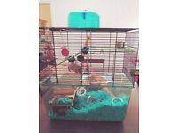2 friendly gerbils with big cage, food and its FREE