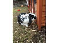 Big girl rabbit
