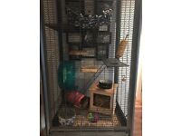 2x degus for sale, tall cage and full set up