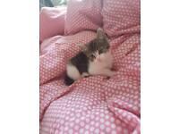 9 weeks old kittens