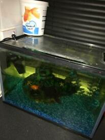 2 goldfish, tank and food