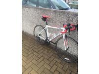 Carrara road bike