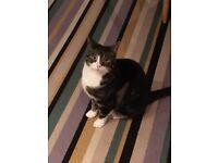 missing cat streatham hill