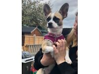 Puppy looking for loving home