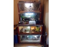 reptile collection: 5 ball pythons 2 leopard gecko and vivarium stack with full set up