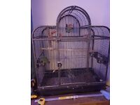 Large cage and two lovebirds