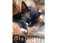 Gorgeous playful kittens for sale