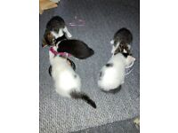 Kittens (ALL RESERVED)