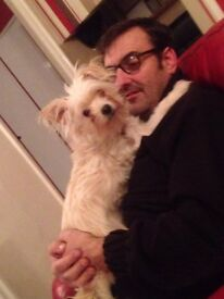 Gorgeous & Loving White Chi x Jack Russell For Sale
