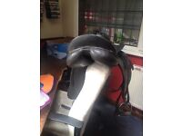 17inch high withered dressage saddle for sale