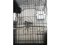 Pair of diamond doves for sale cage included