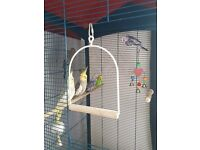 REDUCED!!!! 4 budgies 2 cockateils with cage