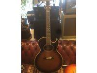 1981 Washburn Tanglewood Acoustic
